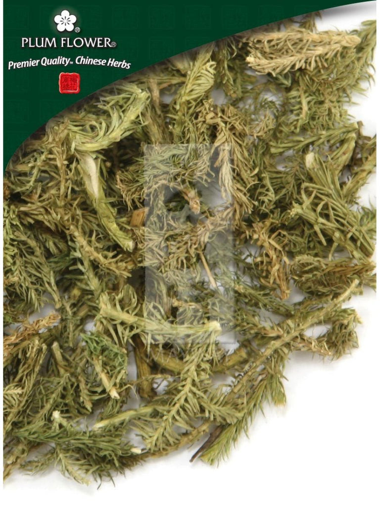 Lycopodium japonicum herb, Whole Herb, 500 grams, Shen Jin Cao