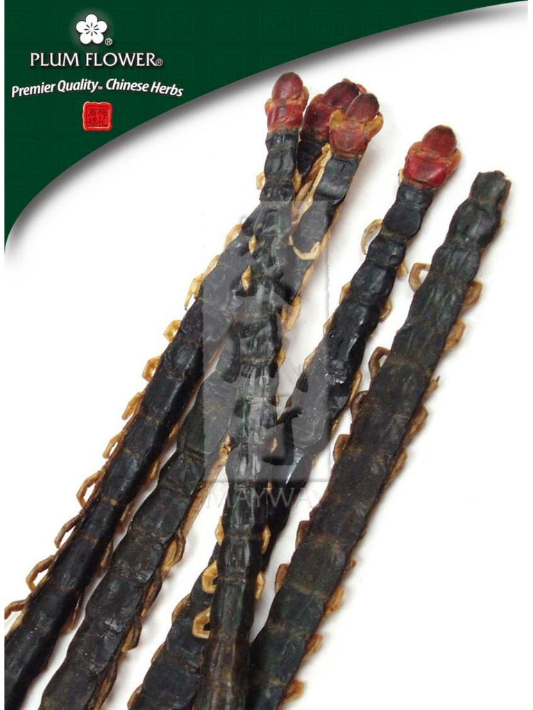Scolopendra subspinipes mutilans / Centipede, Whole Herb, 20 pieces, Wu Gong