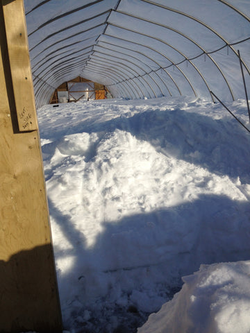 snow filled greenhouse