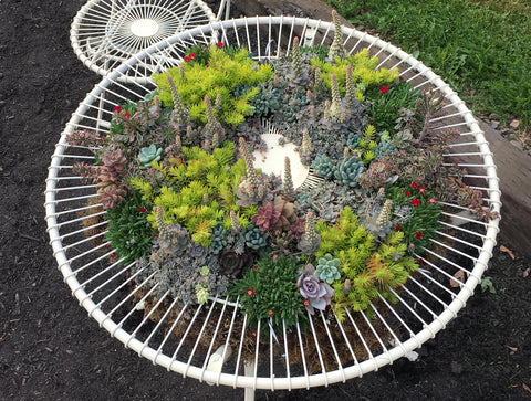 SEDUM TABLE ART