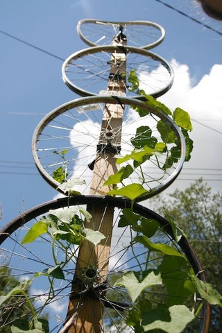 wagon wheel trellis