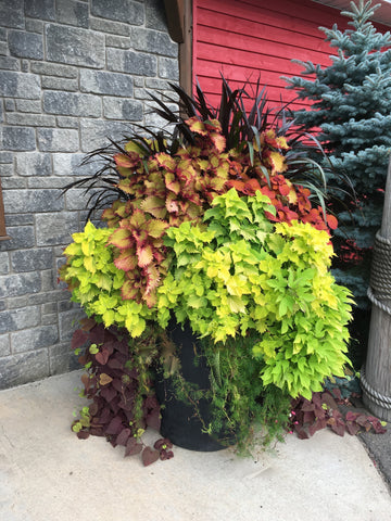 MIXED PLANTER
