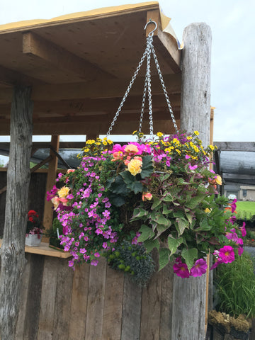 HANGING MOSS BASKET 'SHADE'