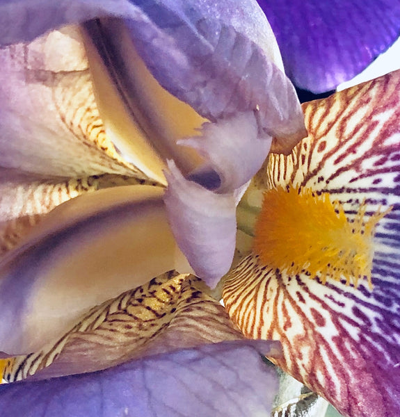 IRISES OF MAY