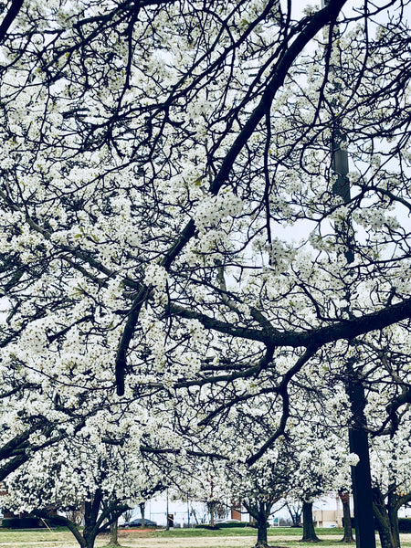 Be Mindful, Be Thankful:  The Beauty and Smell of Spring