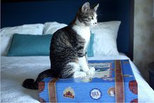 Kitty2Go! ® The Original Travel Litter Box