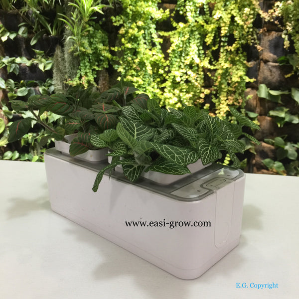 Hydroponic Mini Garden (Out of Stock)