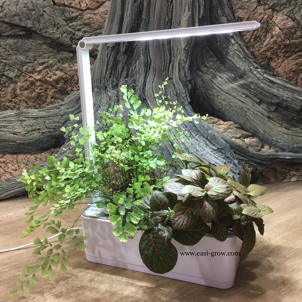 Hydroponic Mini Garden LED (Promotion Sales)