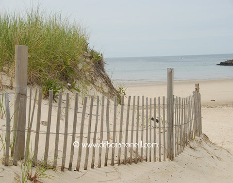 Ocean, Sandy Fences, Cape Cod, MA, 16x20 print