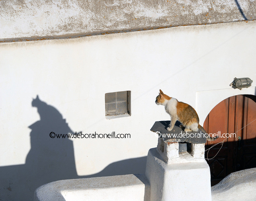 Funny Greece Cat With Shadow, 16x20 print