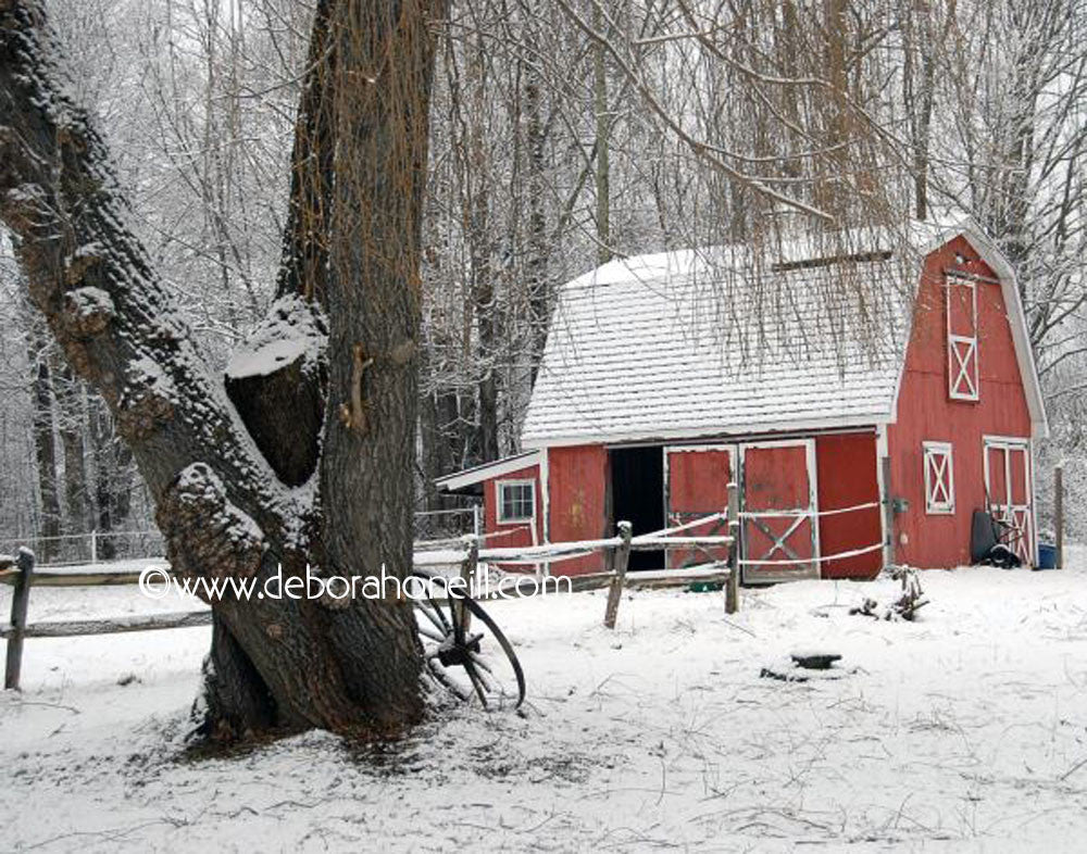 Northeast, Winter Farm, Chesterfield, MA, 16x20 print