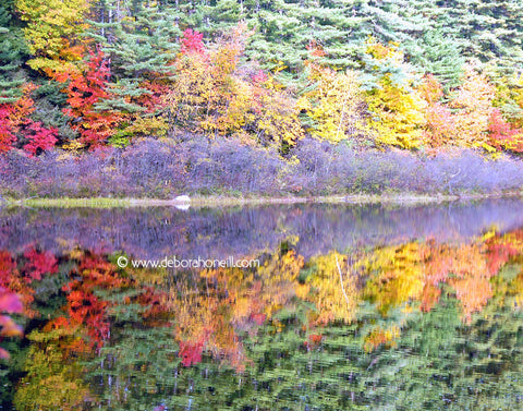 Northeast, Fall Reflection, MA, 16x20 print