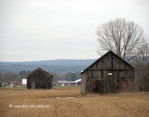 Barns Near and Far, Hadley, MA, 16x20 print