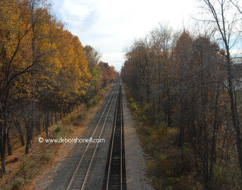 Northeast, Train Tracks & Foliage, 16x20 print