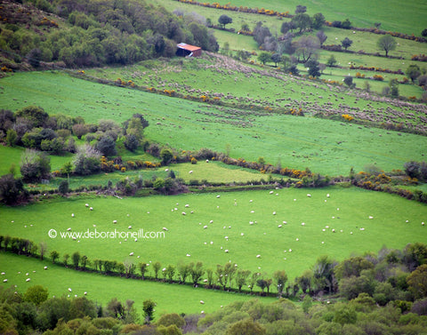 Ireland, Irish Wool, Dingle, 16x20 print