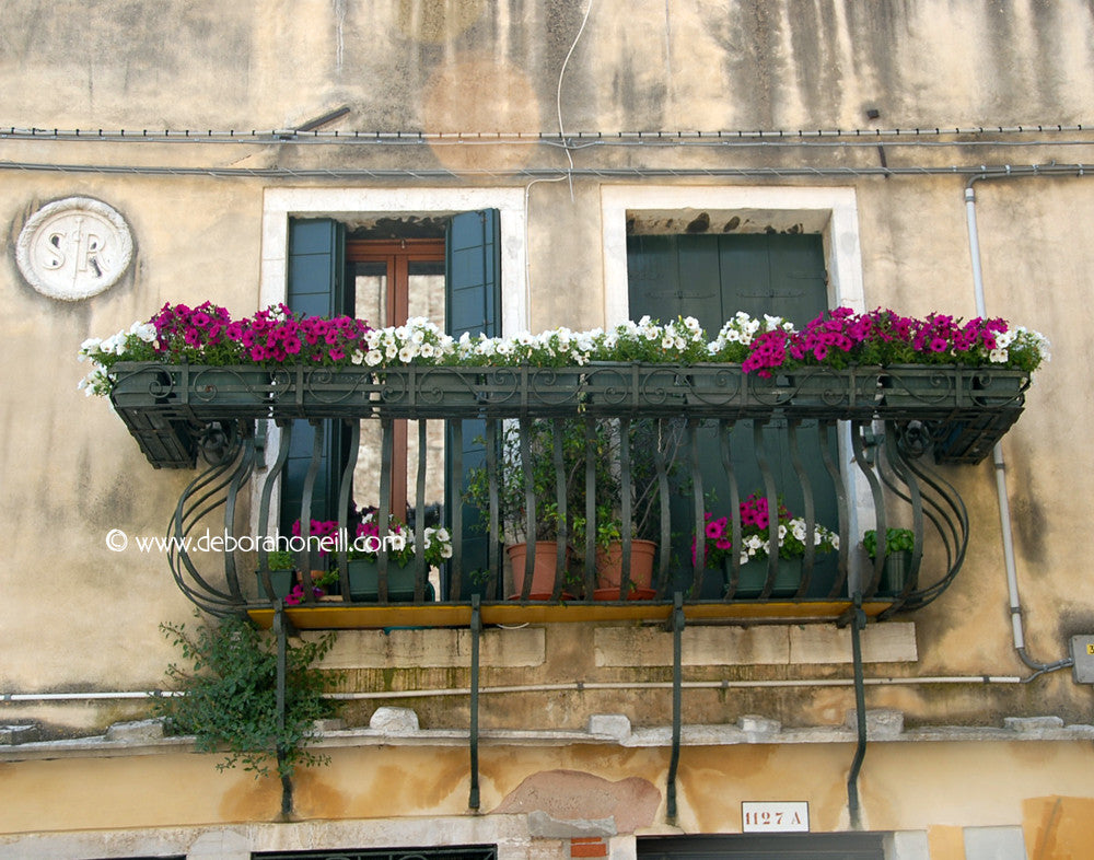 Italy, Venice Two Windows With Flowers, 16x20 print
