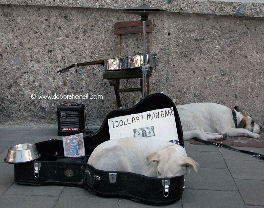 Funny Dogs, One Man Band, Germany, 16x20 print