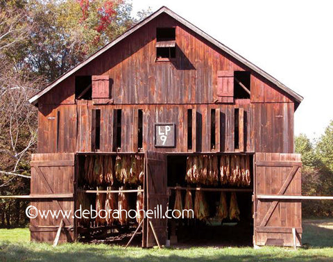 Barn, Red Tobacco Barn, 16x20 Print