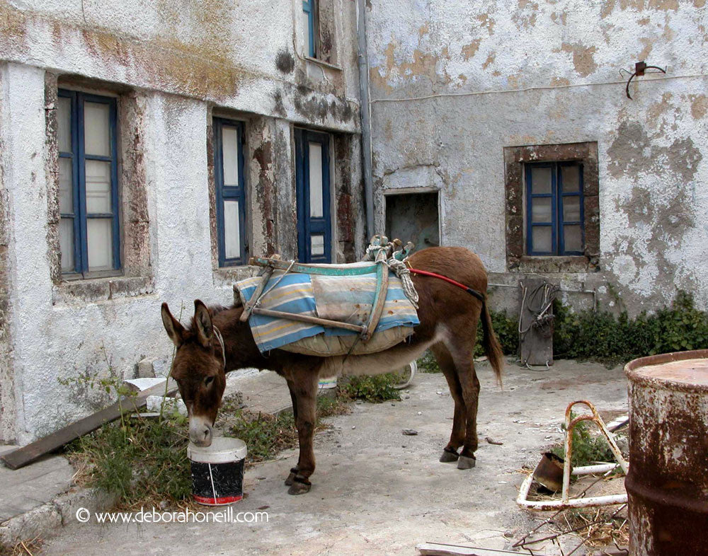 Spain, Backyard Burro in Rhonda,16x20 print