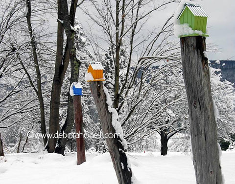 Northeast, Bird Houses in the Snow, Westhampton MA,16x20 print