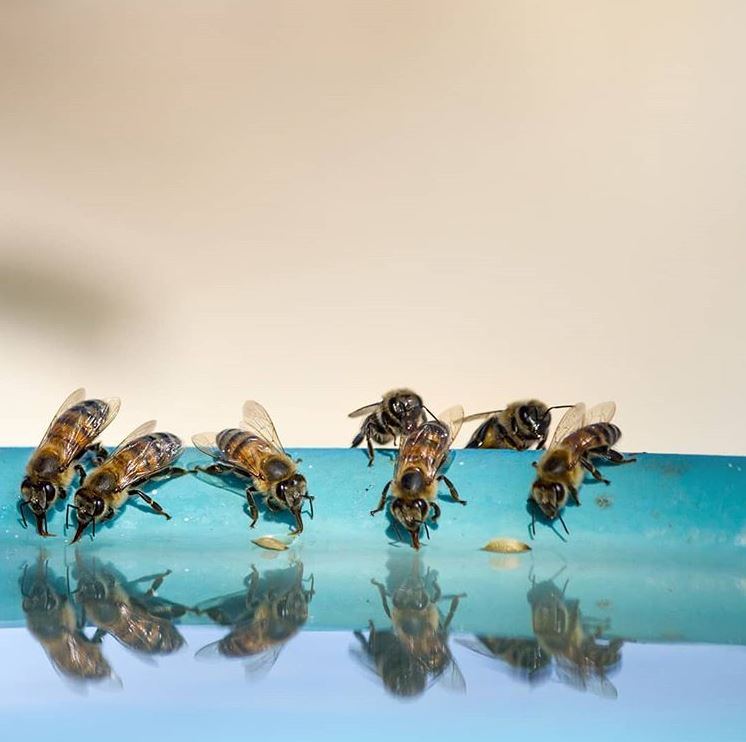 10 Fun Facts About Honeybees (That Will Amaze You)