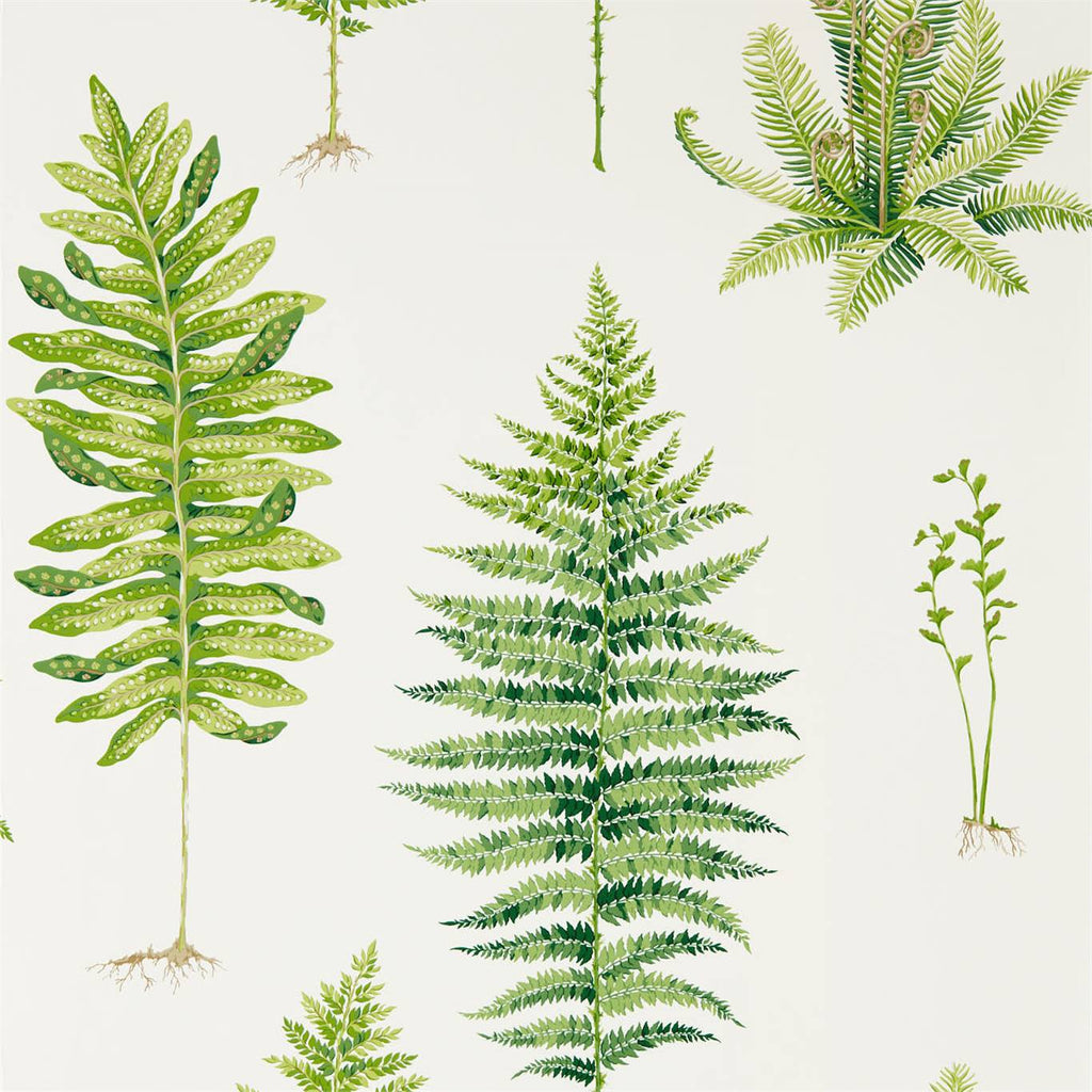 Fernery Botanical