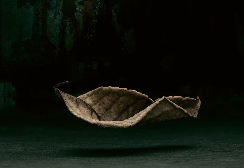 Artistic Photography Suspended Leaf