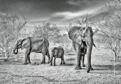 Artistic Impression Elephant Family
