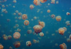 Aquarium of Jellies
