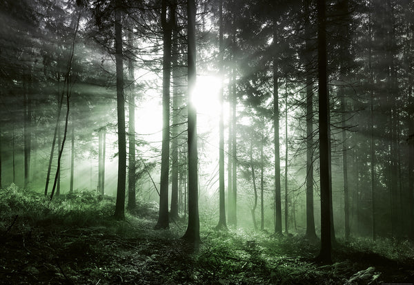 Mystic Woods Sun Through Treed Forest Wall Mural Wallpaper Brokers