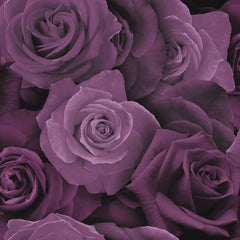 Austin Rose Purple