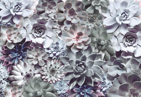 Shades Succulent Wall Mural