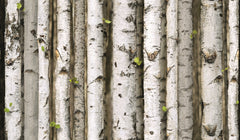 3D Realistic Nordic Birch Trees