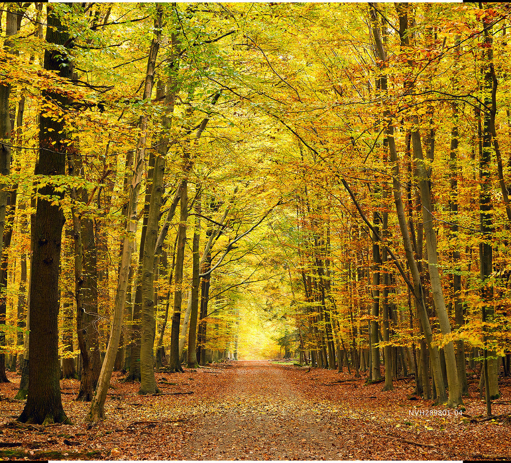 Golden Lane in Autumn Forest