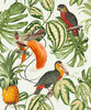 Paradisio Tropical Birds