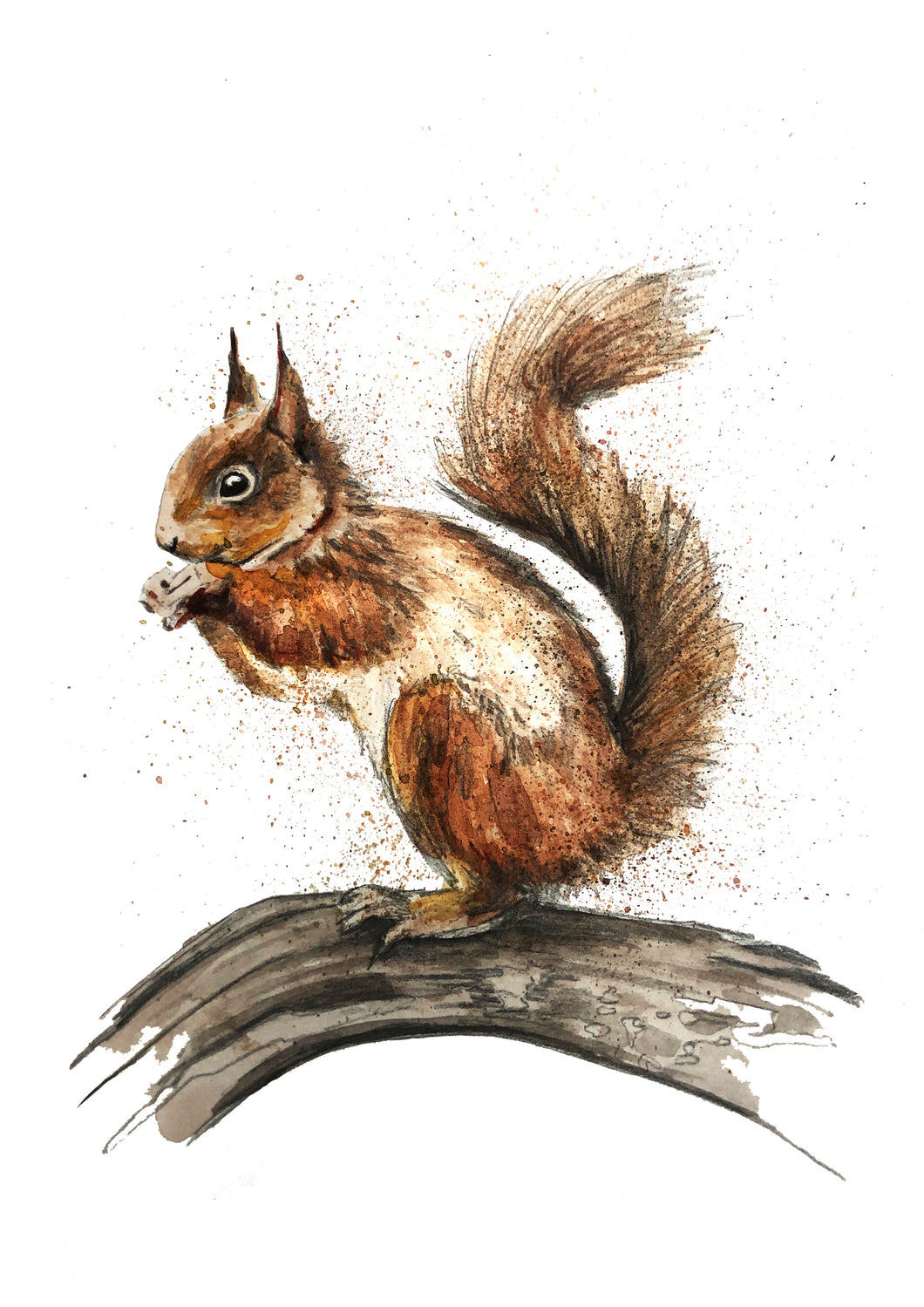 Squirrel Print by Ellie Baarda in Ink and Watercolour - Yorkshire Artist