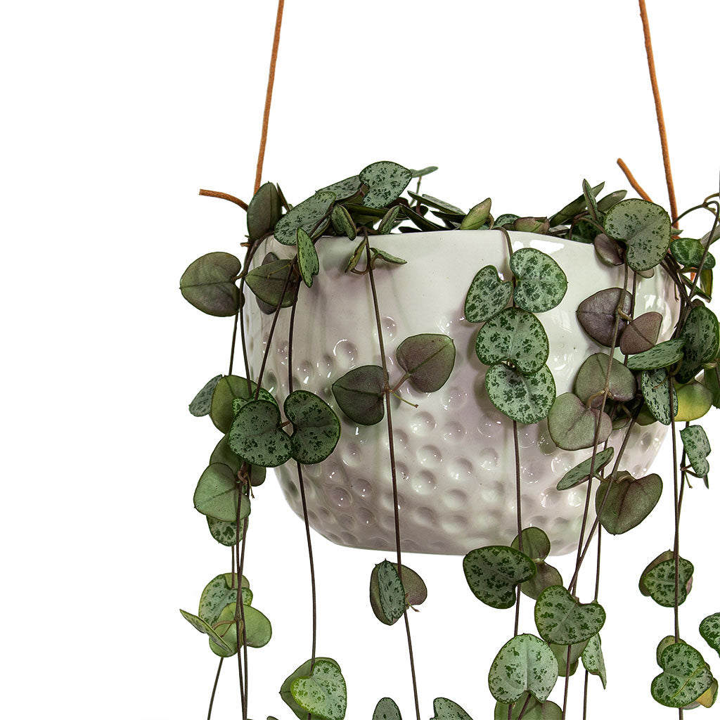 String Of Hearts - Dot Hanging Plant Pot