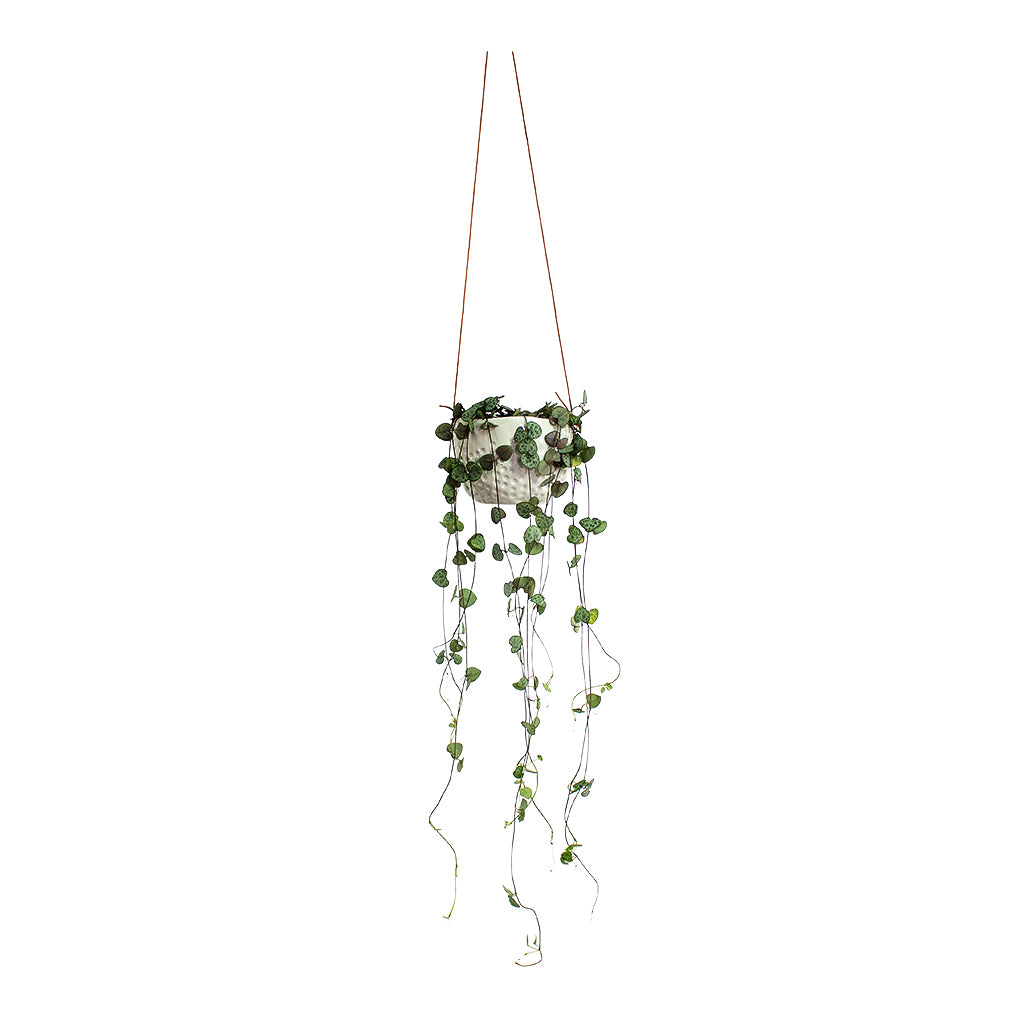 String Of Hearts Dot Hanging Plant Pot