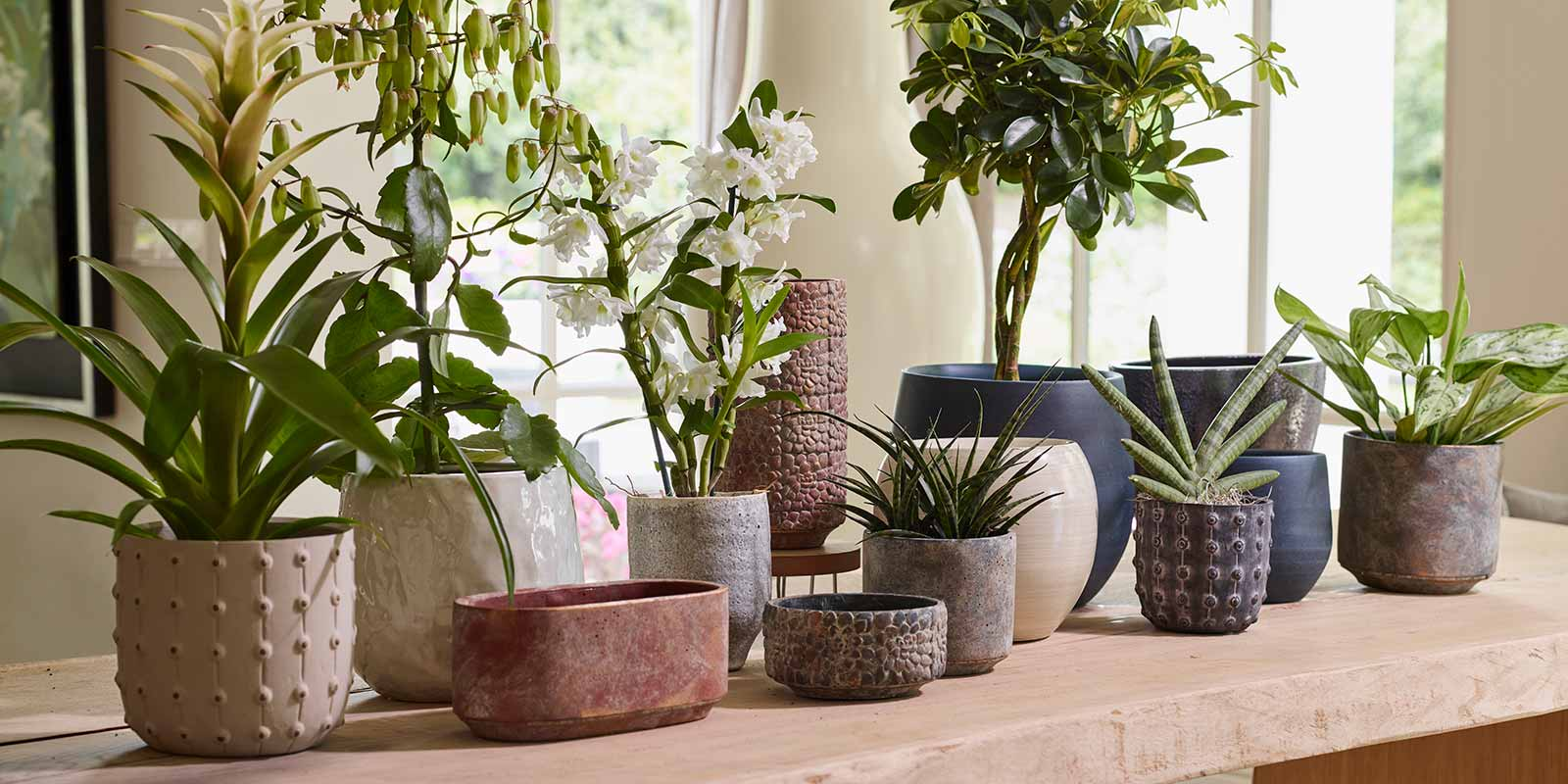 Shop for Indoor Ceramic Plant Pots & Easy Care Houseplants