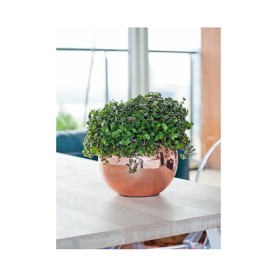 Beth Ball Plant Pot - Platinum Rose