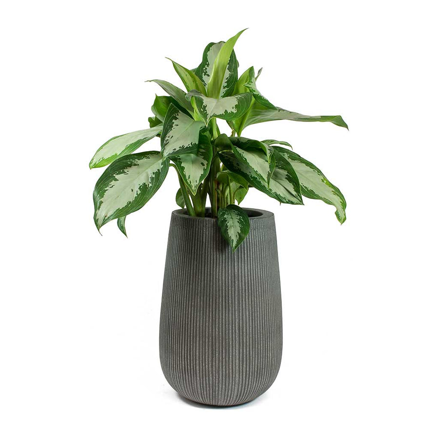 Patt High Plant Vase - Ridged Dark Grey