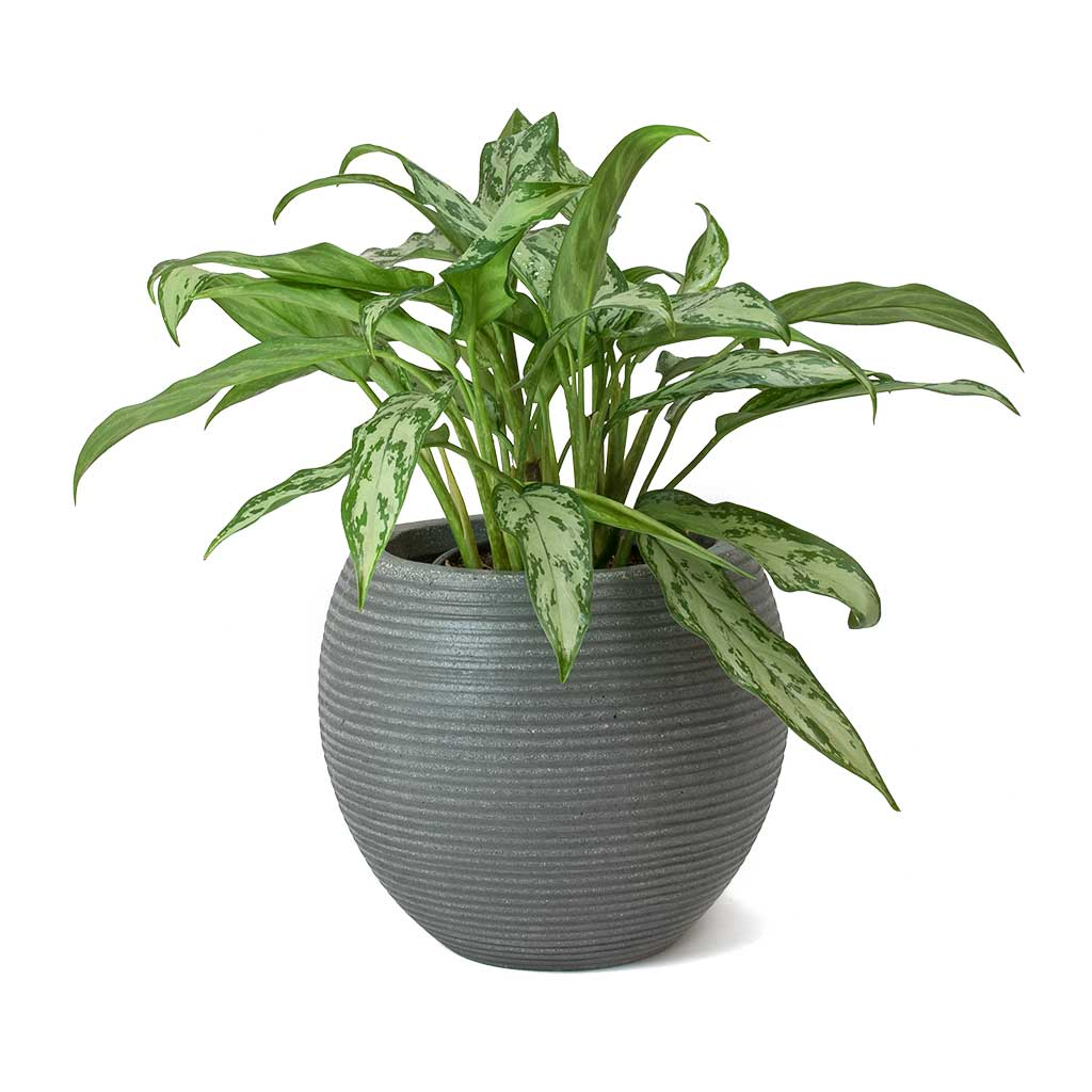 Abby Ball Plant Pot - Ridged Dark Grey 23 x 20cm