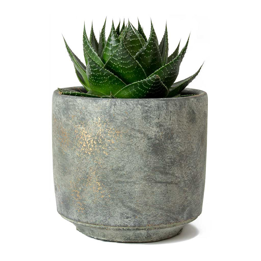 Saar Plant Pot - Earth Cement 14 x 13cm