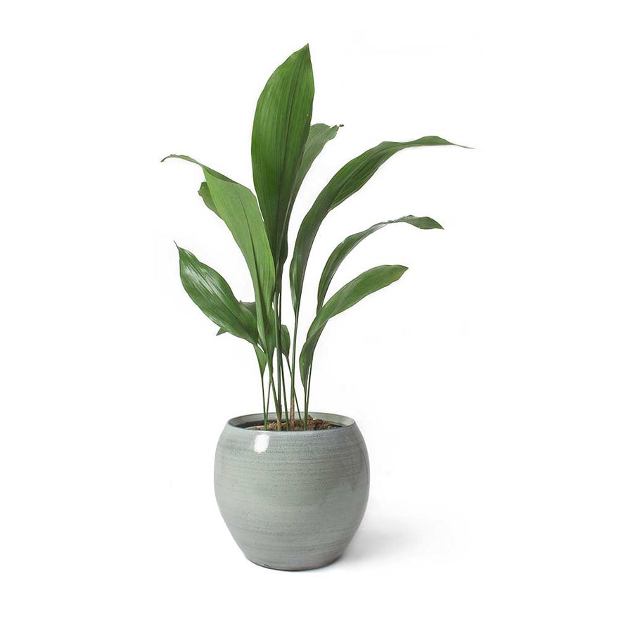 Cresta Plant Pot - Ice Blue