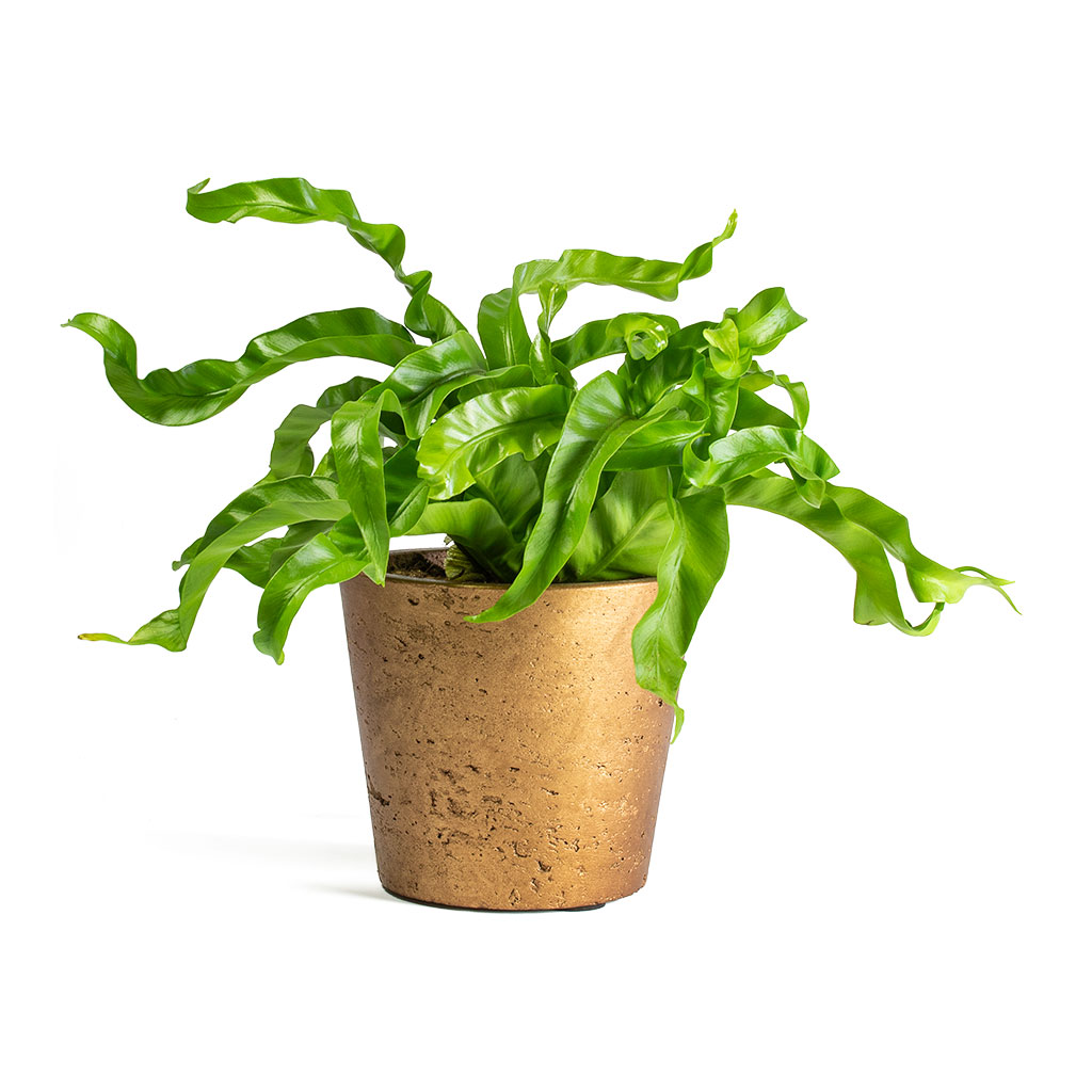 Mini Bucket Plant Pot Metallic Copper - Large