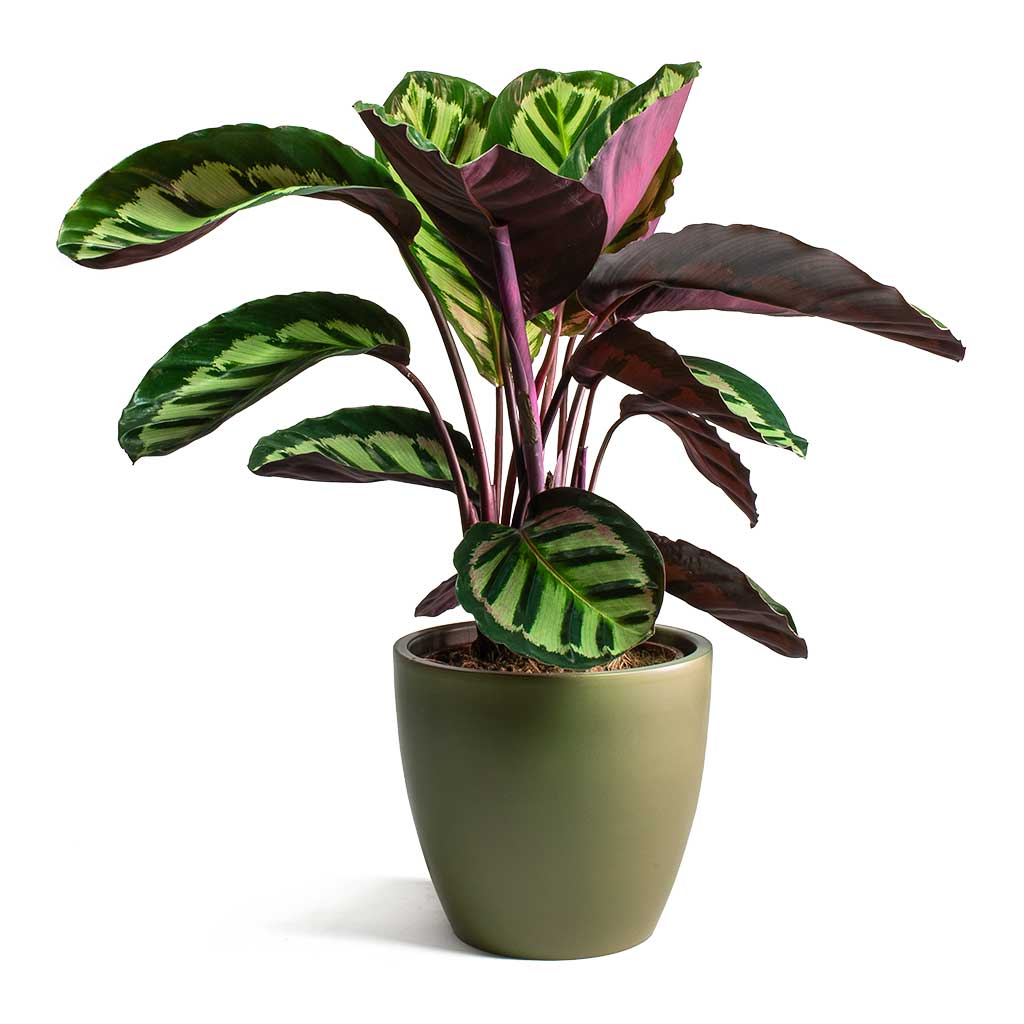 Sven Plant Pot Green  - Small