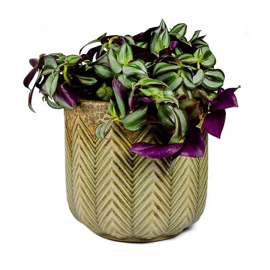 Cecil Plant Pot - Taupe - Large