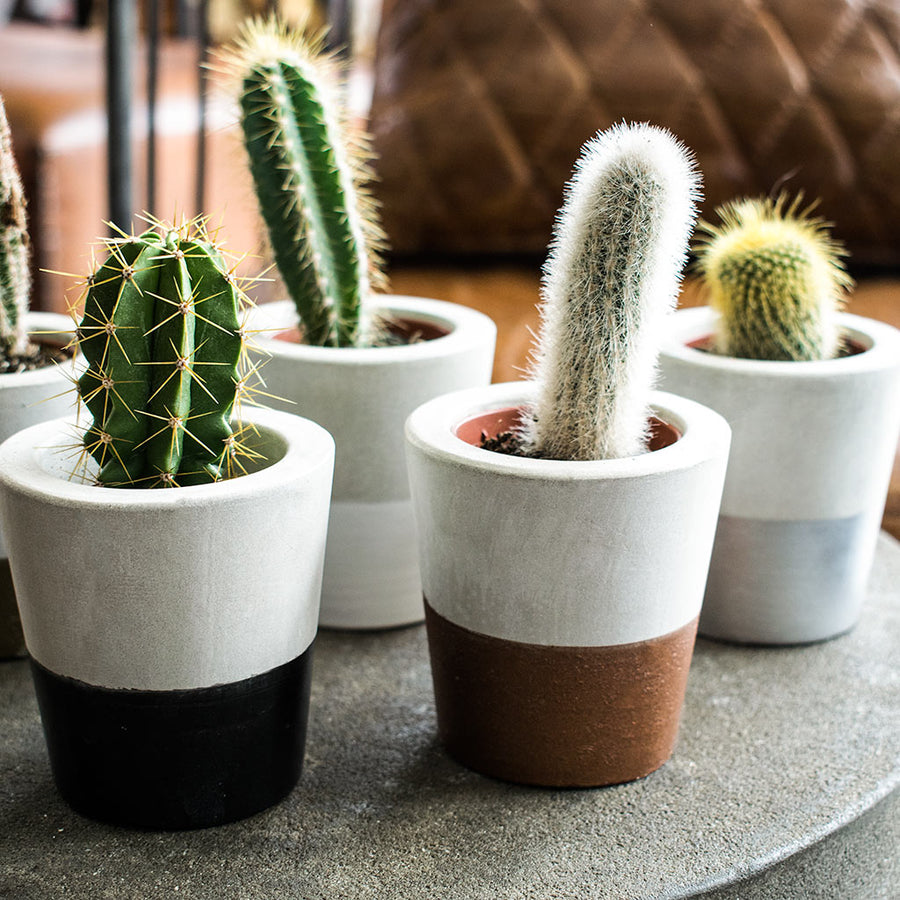 Cement Cacti Pot - Silver