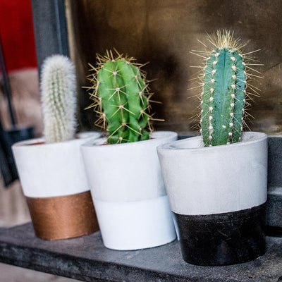 Cement Cacti Pots Bronze, White, Black