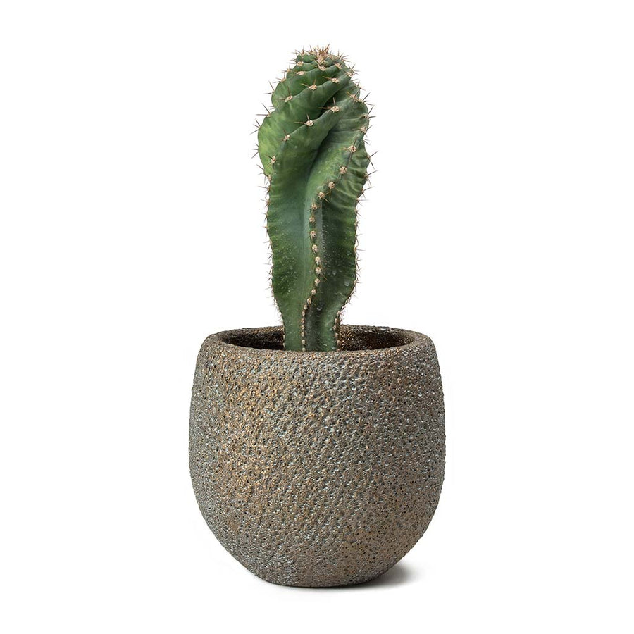 Eva Plant Pot - Blue Gold 10cm